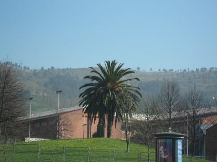 la palmera de los Basterretxe / Foto afopres